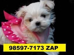Canil Lindos Cães Filhotes BH Maltês Basset Yorkshire Pug Shihtzu Lhasa Beagle Bulldog