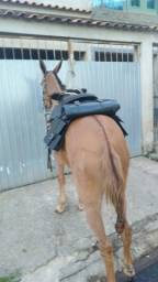 Vendo mula de marcha picada
