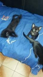 Gatinhos fofos para adoção