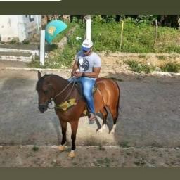 Cavalo mist Quarto de Milha