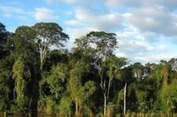 15.000 Hectares de Mata, Ipê, garapeira, angelim, Amazonas e Acre -AM,