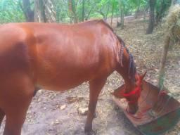 Cavalo top pra passeio