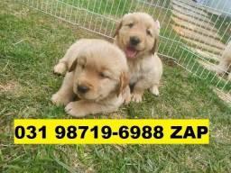 Canil Belos Filhotes Cães BH Golden Pastor Dálmata Boxer Labrador Rottweiler