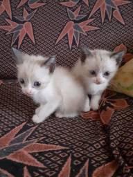 doa-se gatinhos filhotes