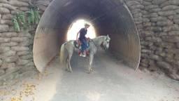 Égua Mangalarga picado
