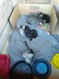 Doam-se filhotes de gato