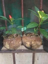 Mudas de plantas