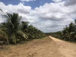 FZ09=Vendo Imóvel Fazenda em Sao Luis do Curu Ceara Nordeste Brasil