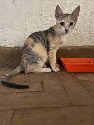 Urgente doação gata fêmea