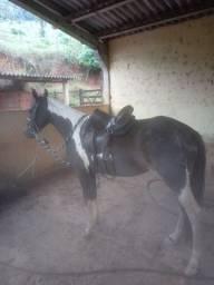 Égua MM Pampa de preto