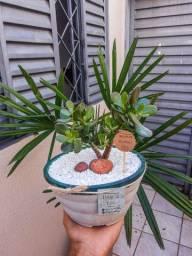 Planta Jade ?  /  Vaso em concreto