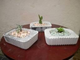 Vasos de cimento com suculentas naturais (Ipatinga MG)
