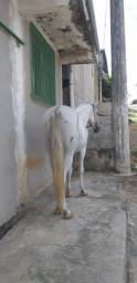 Cavalo Mangalarga Machador Picado