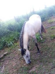 Vendo egua  mestiça criola e mangalarga