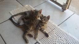 Doação de gatos