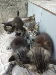 5 gatinhos