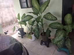 Plantas COMIGO NINGUÉM PODE