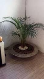 Vende-se lindo vaso com palmeira