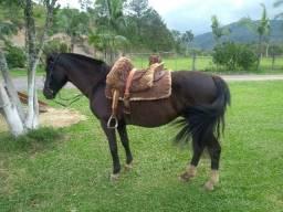 Égua mansa