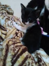Doa se uma gatinha preta e branca
