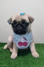 Pug fêmea disponível
