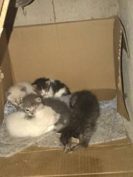 Gatos pra adoção , 5 filhotes .