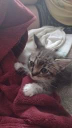 Doando gatinho macho 2 meses
