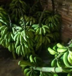 Vende cacho de banana