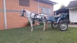Cavalo de charrete E montaria