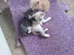 Gatinhos lindos