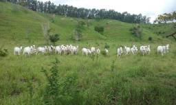 47,7 hectares a 60 km de ipatinga região naque