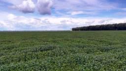 Fazenda 663 Hectares Plantando Lavoura - Nova Maringa - MT