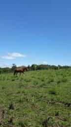 1 égua e 1 cavalo