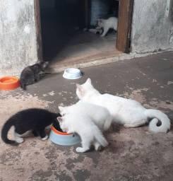 Doamos gatinhos!