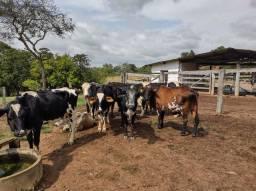 Vendo 9 vacas  2,900.00