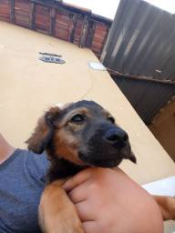 Cachorro filhote 4 meses raça nao indentificada