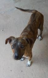 Cadela para doação