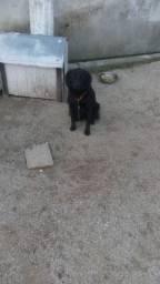 Quero doar essa cadelinha ela e bem mova