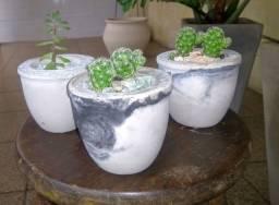 Vasos com cactus naturais (Ipatinga MG)