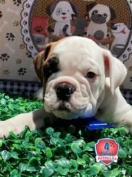 Bulldog Ingles - filhotes disponiveis!!!