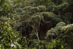 100 alqueires de Mata para Compensação Ambiental (Willian Ricardo)