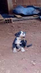 Cachorrinho filhote para doação