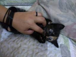 Linda gatinha para adoção levo até vc ZAP 988-540-491