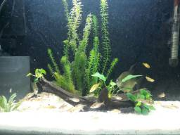Vendo aquário completo, ótimo custo benefício.