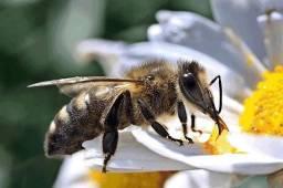 Resgate e remoção de abelhas