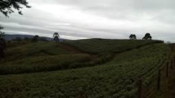 Fazenda Nossa Senhora Aparecida