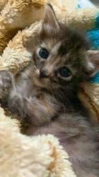 Doação de gatinha fêmea