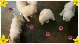 Poodle mini toy