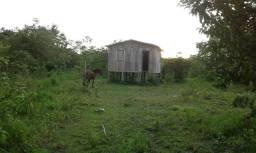 Sitio no Lago Novo - Boca do Acre