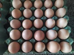 Frango caipira, ovos caipira, pato